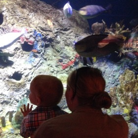Checking out the fish at the zoo